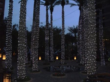 Lighted_trees
