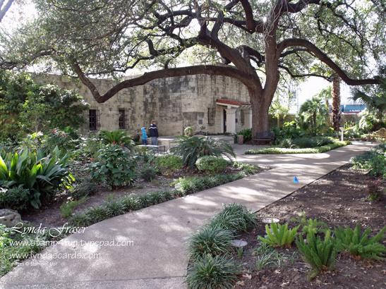 Alamo_back